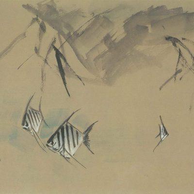 Chen Wen Hsi Angelfish