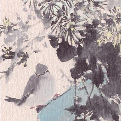 Chen Wen Hsi Pigeon and Chrysanthemums